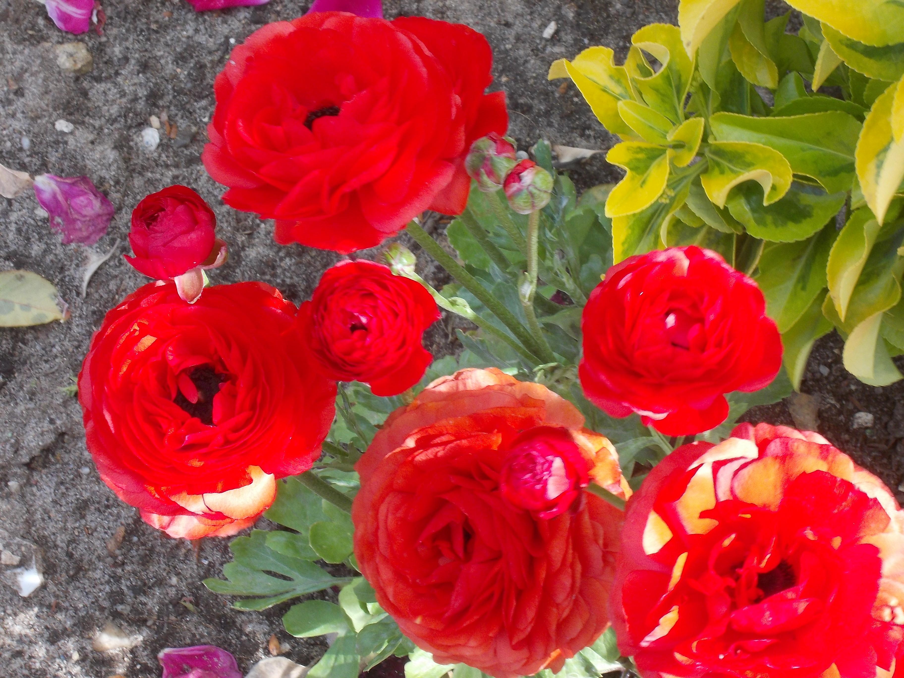 Imagens do Autor………Flores da Primavera em Portugal