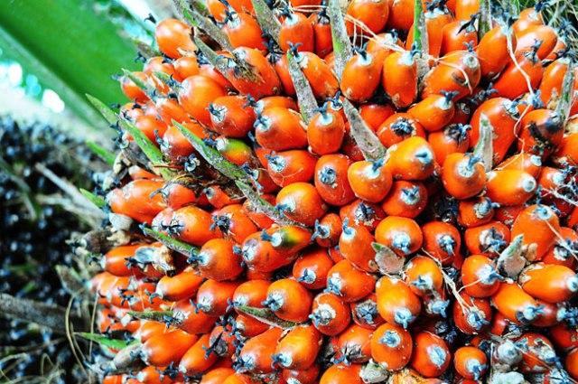 Dende-fruto