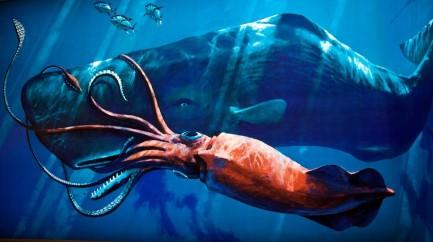 Baleias - o cachalote em luta com uma lula gigante
