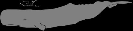 Baleias - o cachalote imagem comparativa
